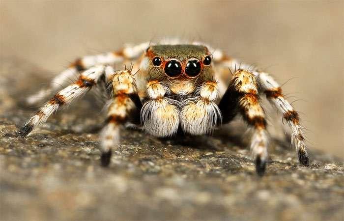 Факты о пауках фото интересные факты про пауков в картинках фото  Удивительные факты о пауках