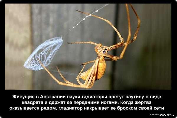 какова крепкость сети паука