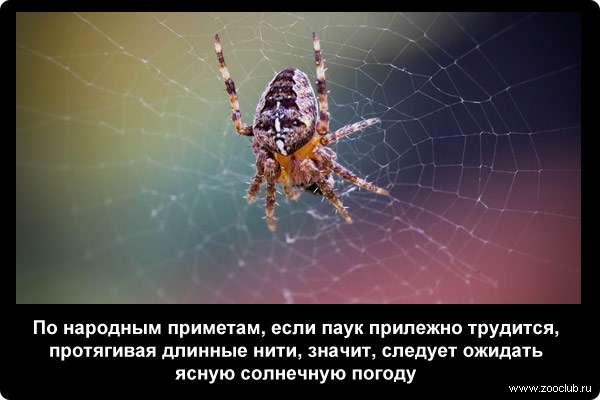 забавные, романтические, примета увидеть вечером большого паука оно