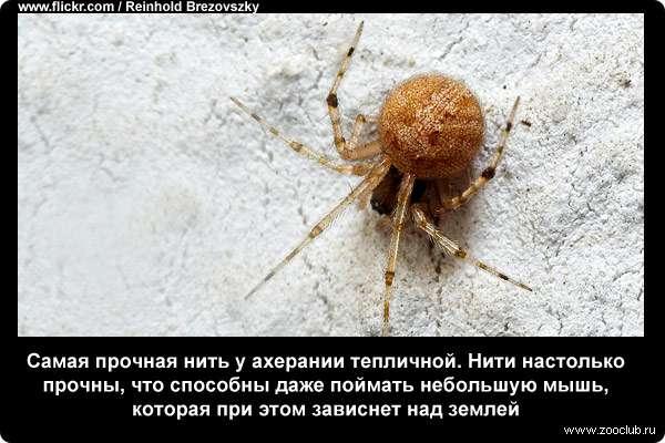 Любопытные факты о пауках фото забавно про жизни пауков в  Удивительные факты о пауках
