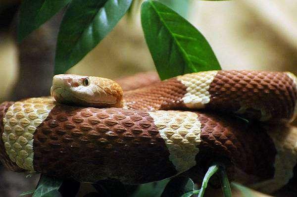 Змея, фото рептилии фотография