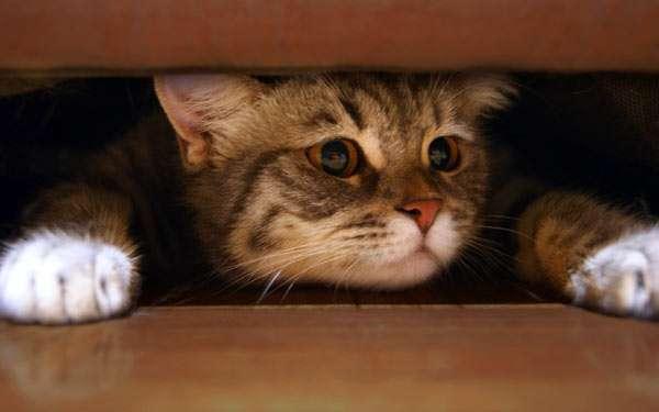 Кошка забралась (спряталась) под диваном кроватью, фото фотография домашние кошки