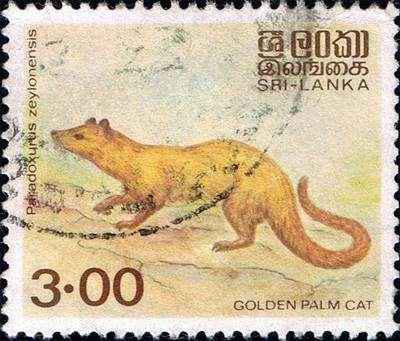 Шри-ланкский мусанг (Paradoxurus zeylonensis), рисунок картинка виверровые животные