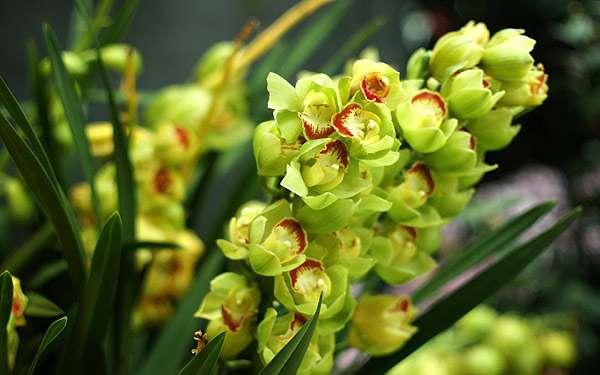 Орхидея, фото фотография цветы