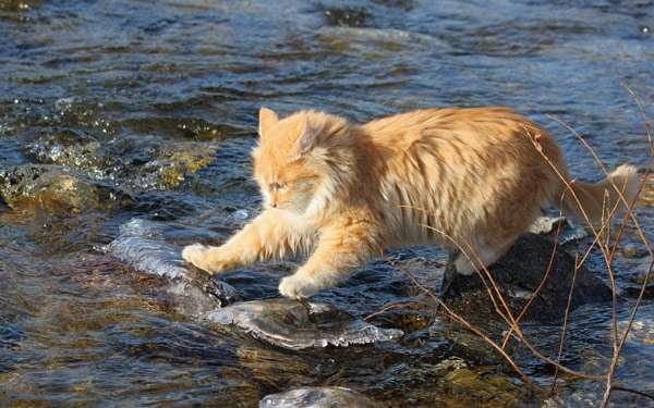 Рыжий кот играет с водой, фото фотография картинка