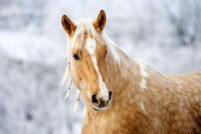 Когда ацтеки впервые увидели всадников на лошадях, они решили, что это единое животное