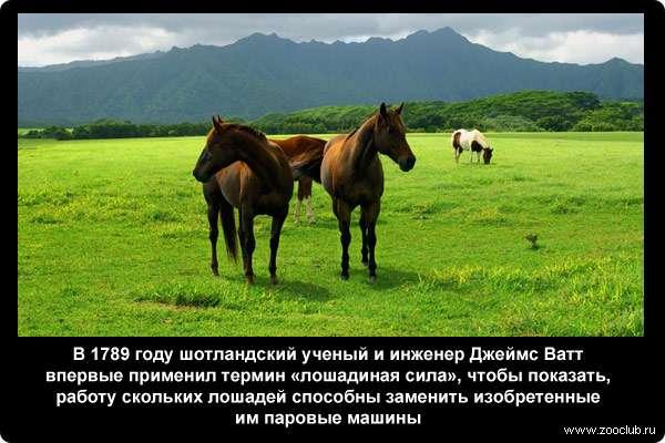 В 1789 году шотландский ученый и инженер Джеймс Ватт впервые применил термин «лошадиная сила», чтобы показать, работу скольких лошадей способны заменить изобретенные им паровые машины