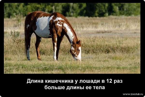 Научные факты про лошадей фото занимательные факты про лошадей в  Факты о лошадях