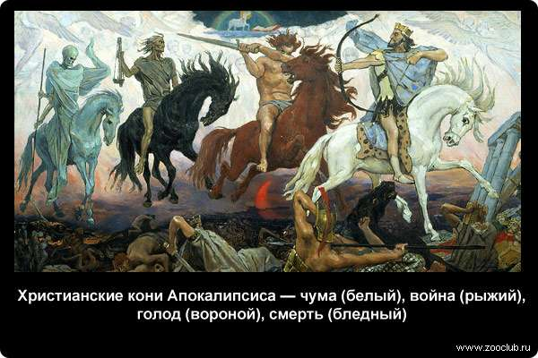 Необчные факты о домашних лошадях фото занимательно о конях в  Факты о лошадях