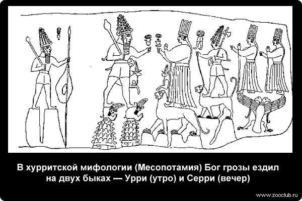 В хурритской мифологии (Месопотамия) Бог грозы ездил на двух быках — Урри (утро) и Серри (вечер)