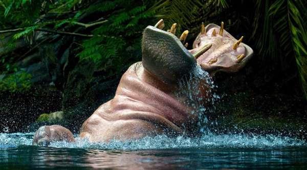 Бегемот (Hippopotamus amphibius), фото фотография картинка