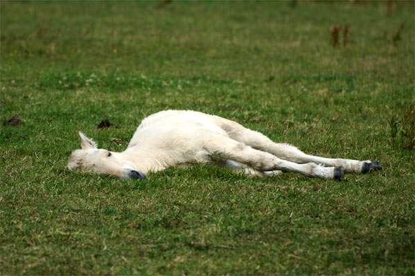 Спящая лошадь, фото фотография