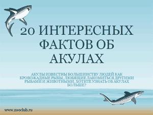 Бесплатно скачать презентацию для школы - 20 интересных фактов об акулах