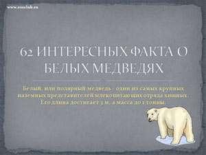 Школьные презентации скачать бесплатно скачать бесплатно  Бесплатно скачать презентацию 62 интересных фактов о белых медведях