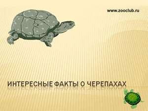Презентации для школы бесплатно скачать презентации о животных по  Скачать презентацию Интересные факты о черепахах