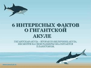 Скачать презентацию для школы - 6 интересных фактов о гигантской акуле