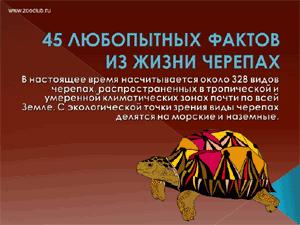 Бесплатно скачать презентацию для школы - 45 любопытных фактов о черепахах