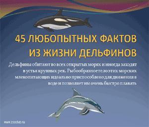 Бесплатно скачать презентацию для школы - 43 любопытных факта из жизни дельфинов