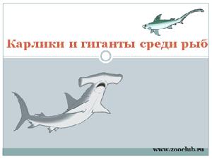 Бесплатно скачать презентацию для школы - Карлики и гиганты среди рыб