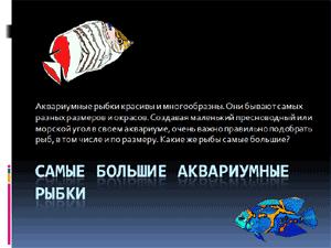 Бесплатно скачать презентацию для школы - Самые большие аквариумные рыбы