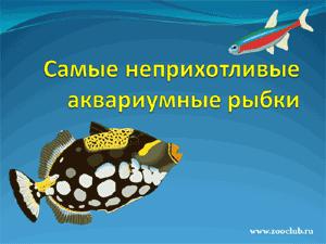 Скачать презентацию - Самые неприхотливые аквариумные рыбы