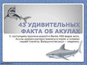 Бесплатно скачать презентацию - 43 удивительных факта об акулах