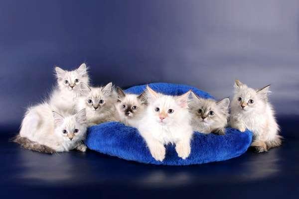 ожирение у кошек диета