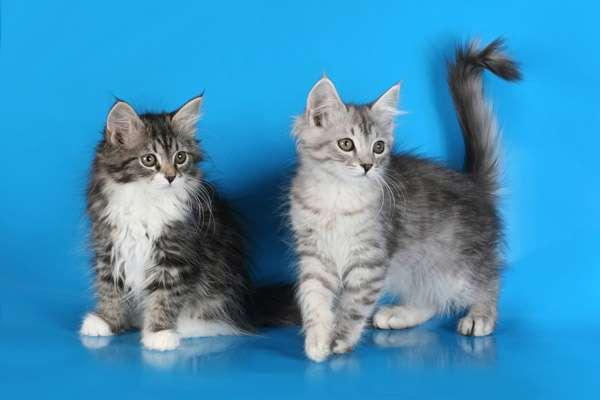 как долго можно давать кошке преднизолон кредит птс краснодар