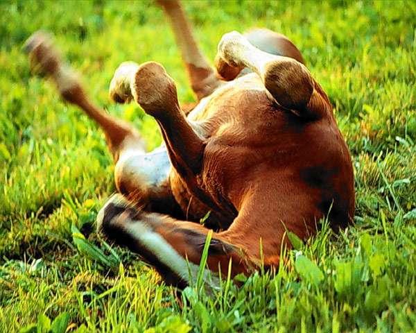 Почему конь не валялся? Откуда взялось выражение конь не валялся?