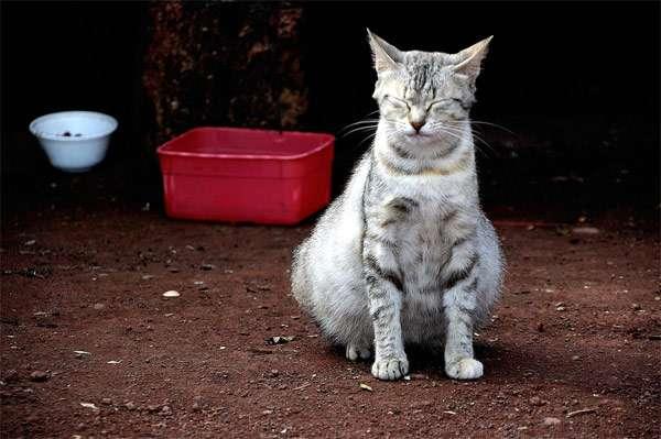 Кошка беременная и мало ест