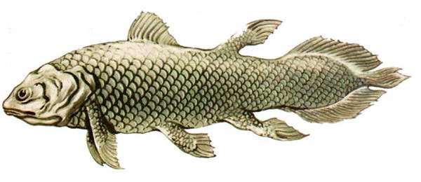 10 самых страшных рыб фото, Самые страшные рыбы в мире ...  Латимерия