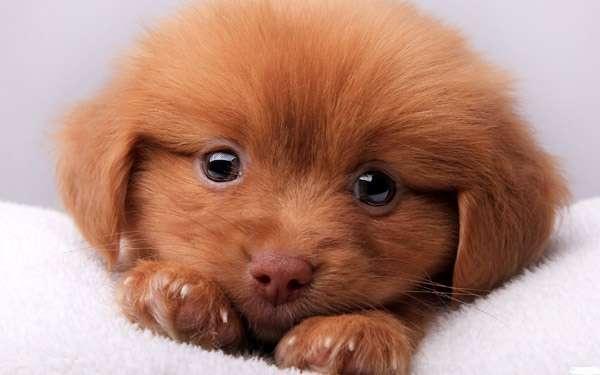 Почему собака ест своих щенков? Почему сука съедает своих щенков?