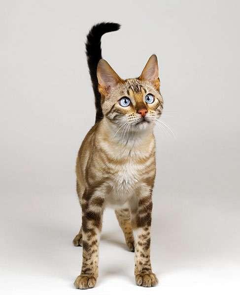 Коты убивают котят