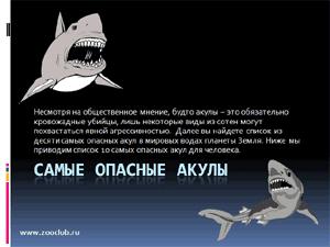 Бесплатно скачать презентацию для школы - Самые опасные акулы