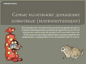 Бесплатно скачать презентацию для школы - Самые маленькие домашние млекопитающие