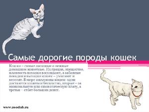 Бесплатно скачать презентацию для школы - Самые дорогие породы кошек