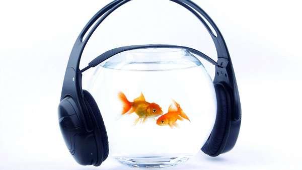 Золотые рыбки в аквариуме, фото фотография рыбы