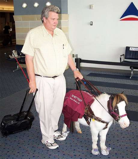 Пони-поводырь, фото фотография лошади