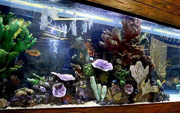 Морской аквариум, рифовый аквариум, фото фотография рыбы
