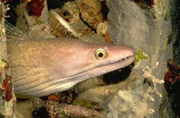 Умные рыбы мурены кровожадный дьявол убежище скат манта  Умные рыбы