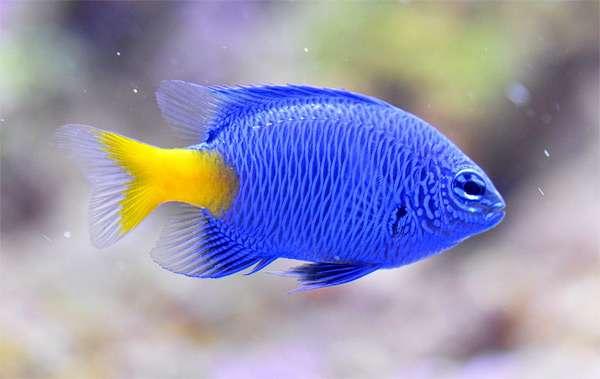 Защита аквариума воды от токсинов, образование токсинов ...: http://www.zooclub.ru/aqua/213.shtml