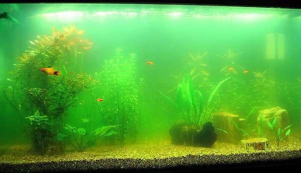 цвет воды в аквариуме зеленая вода коричневая вода аквариуме красновато коричневая цветная вода мутная вода причины помутнения воды как бороться мутной водой аквариумные рыбки