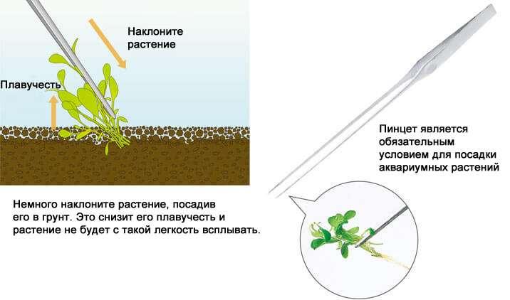 Как сажать аквариумные растения без корней 21