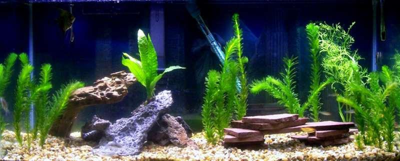 чем снизить количество фосфатов в пресноводном аквариуме