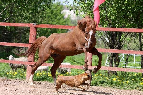 Лошадь и собака, фото лошади фотография