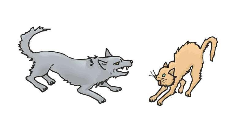 Породы собак, которые подходят детям - Питомцы Mail.ru | 454x760