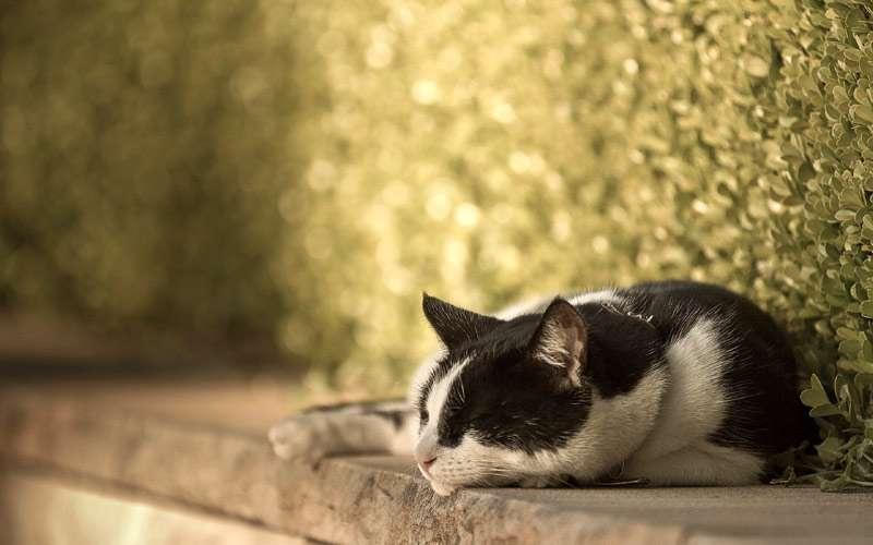 Кошки днем и ночью
