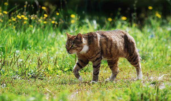 Кошка на своей территории, фото кошки, фотография