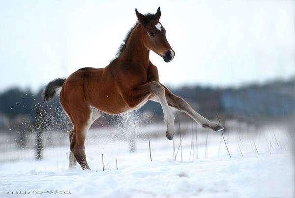 Гарцующий жеребенок, фото лошади фотография