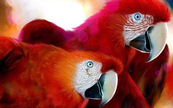 Красный ара (Ara macao), фото уход содержание попугаев фотография